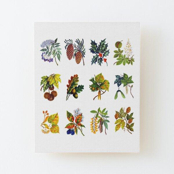 12 arbres : feuille, fleur et fruit Impression montée sur bois