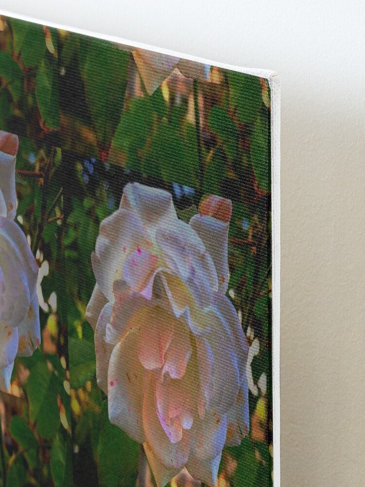 Alternate view of White roses on a Blue  sky By Yannis Lobaina  Mounted Print