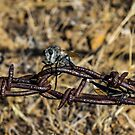 Robber Fly Parking by Richard Bozarth