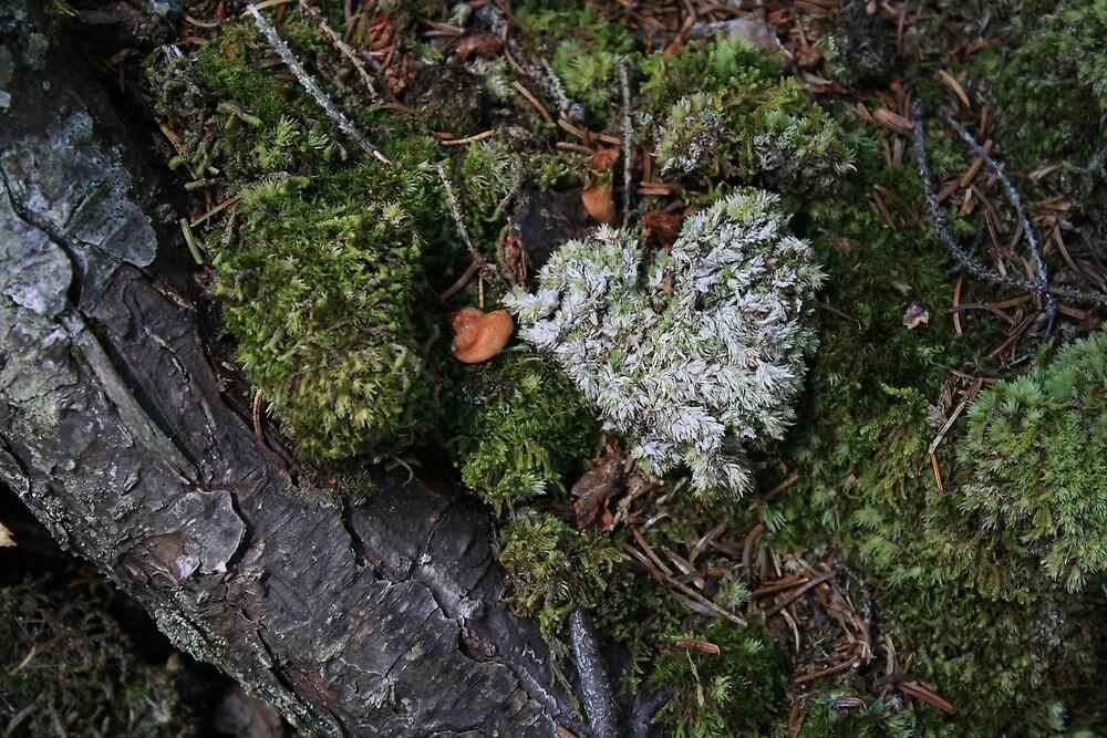 Mossy Heart by DawnSuzette