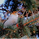Female Pine Grosbeak by Larry Trupp