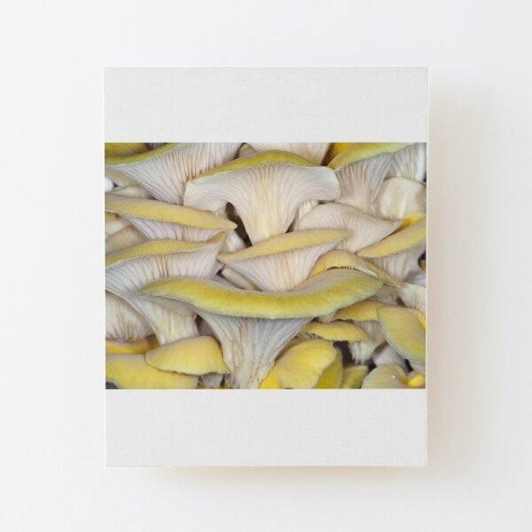 Golden oyster mushrooms Wood Mounted Print