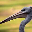 Pelican Close Up by LisaThomasPhoto