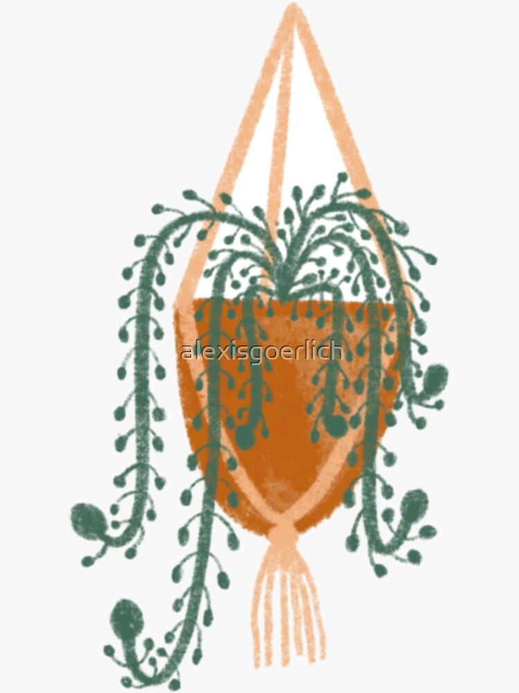 Cute hanging plant by alexisgoerlich