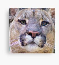 318 Puma Canvas Print