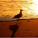 """""""Seagull Shadow Sunset Silhouette"""" by waddleudo"""
