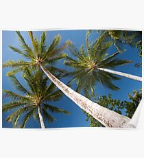 tall palm trees Poster