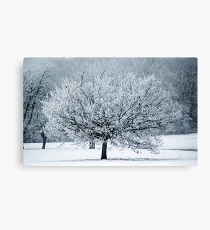 Last Winter Canvas Print