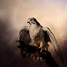 Prairie Falcon by Barbara Manis