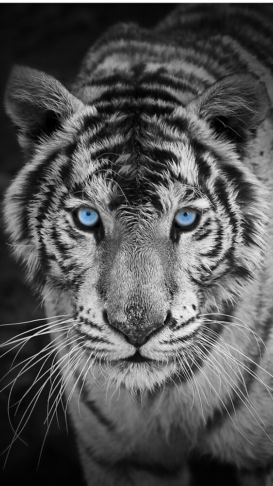 A animal of a tiger by Raudel23