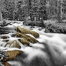 Rocky Mountain National Forest Stream BWSC by Bo Insogna