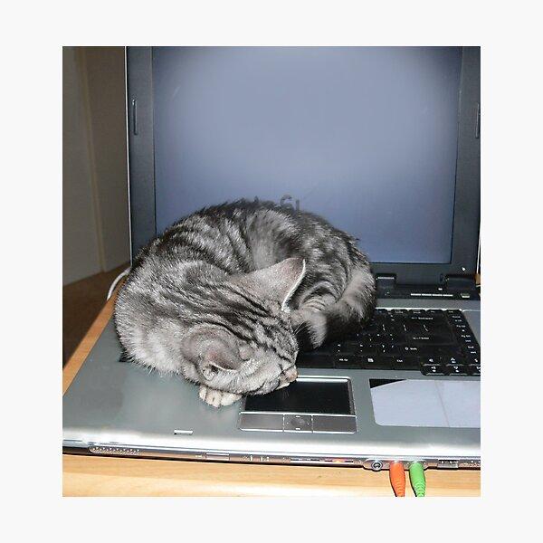 Kitten finds a warm spot Photographic Print
