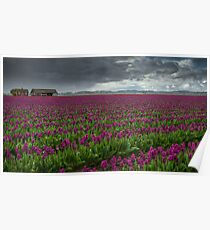 The Tulips Farm Poster