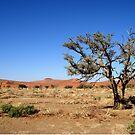 Sossusvlei landscape, Namibia, Africa by Margaret  Hyde