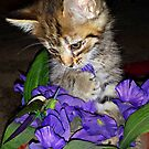 Take time to smell the flowers by Grinch/R. Pross