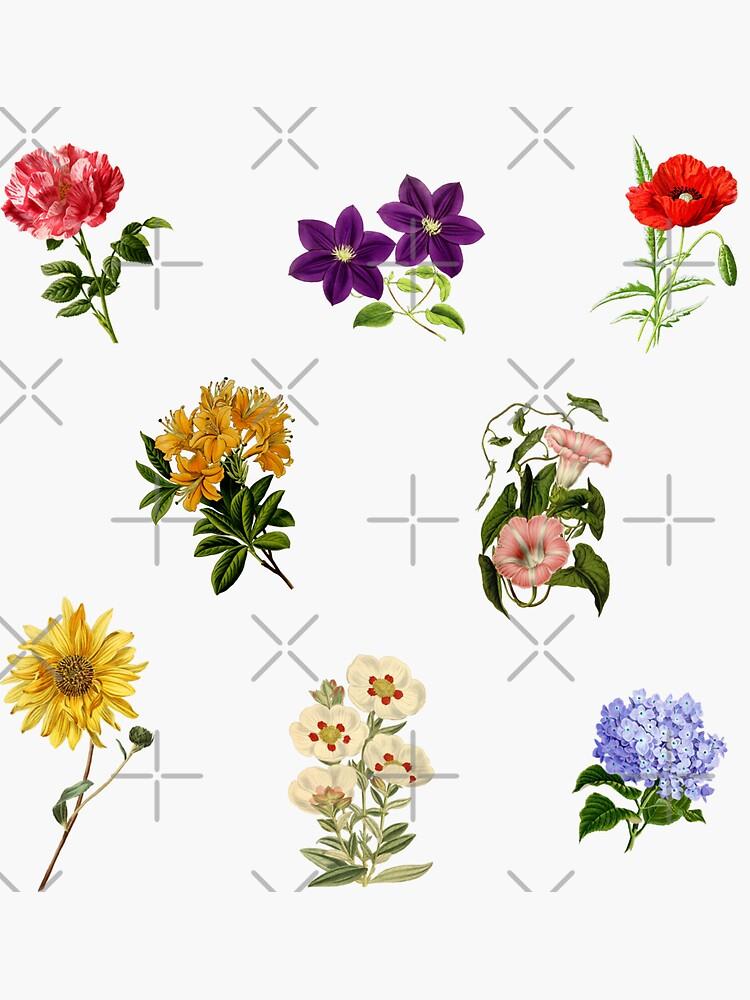 Vintage Flowers pack 1 by Ranp