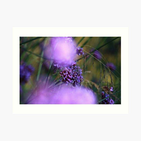 Lilac Bokah Art Print