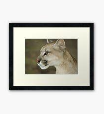 318 puma Framed Print