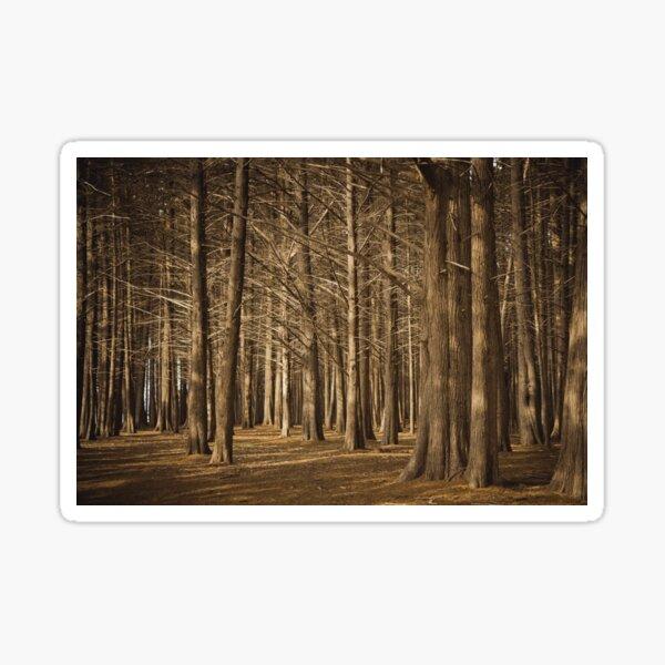 Cypress Grove Forest Sticker
