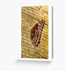 Butterfly with 16 eyes in Mindo? Greeting Card