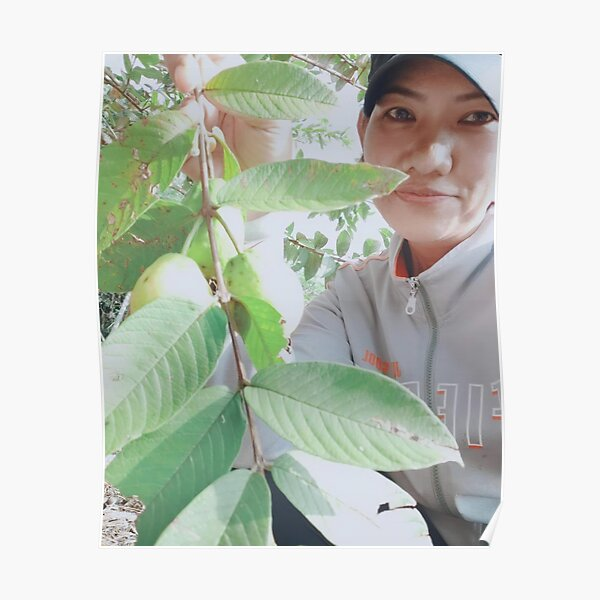 Guava tree with guava fruit Poster