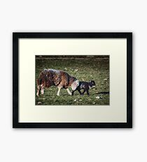 Shepherding Nudge Framed Print