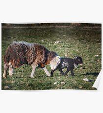 Shepherding Nudge Poster