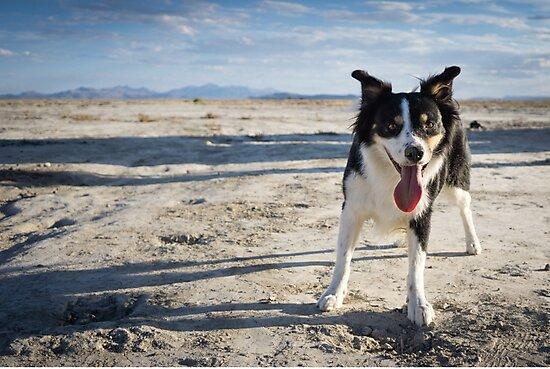 Desert Dog by Brent Olson