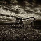 Harvest by Steve Baird