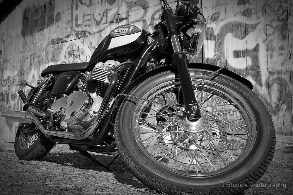 Black and White Triumph by MD Designs