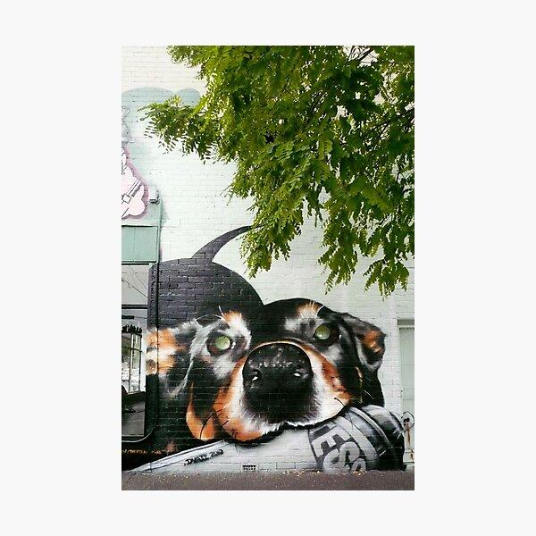 Graffiti Dog! Photographic Print