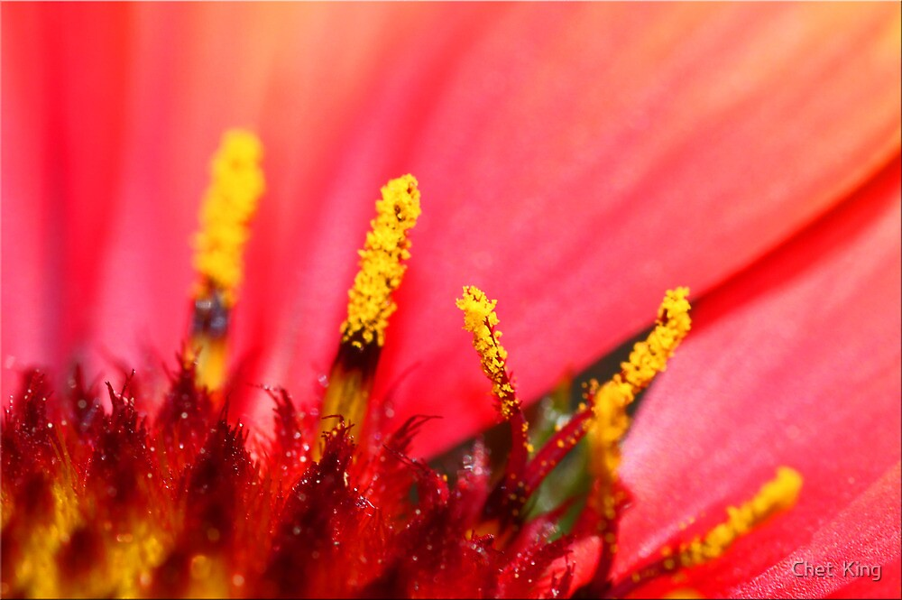 Pollen Details by Chet  King