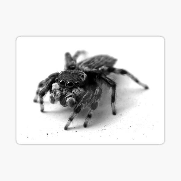 Jumping spider Sticker