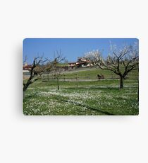 Tuscan landscape in spring time Canvas Print