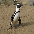 Penguin With A Long Neck by Elly190712