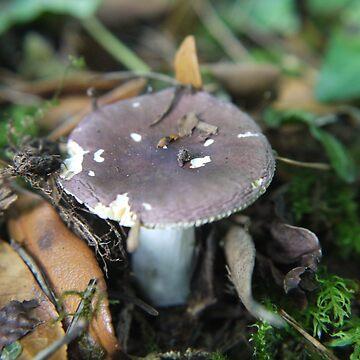Mushroom by Elly190712