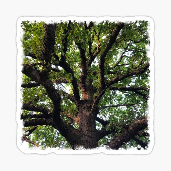 Oak Tree Photography Sticker