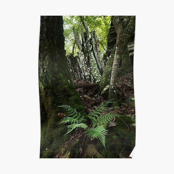 Rocks and Ferns II Poster