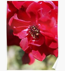 Red Flower Macro Poster