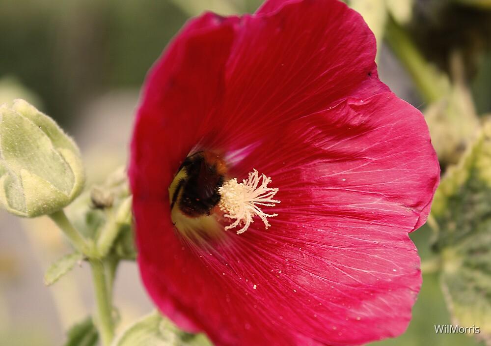 Bee Flower by WilMorris