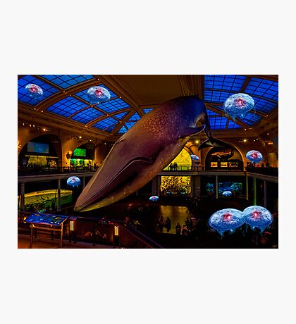 Something's up in the Milstein Family Hall of Ocean Life Photographic Print