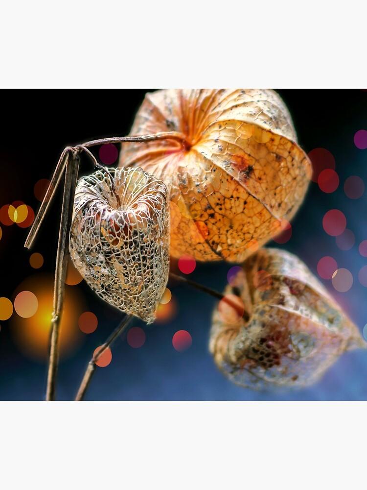 Chinese Lantern Husk by ScenicViewPics