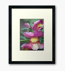 Blossom_1304 Framed Print