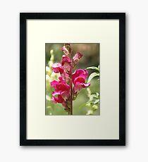 Blossom_1305 Framed Print