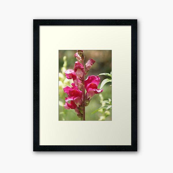 Blossom_1305 Framed Art Print