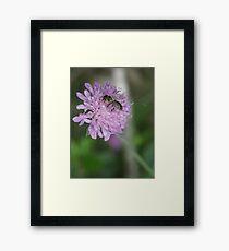 Blossom_1308 Framed Print