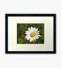Blossom_1309 Framed Print