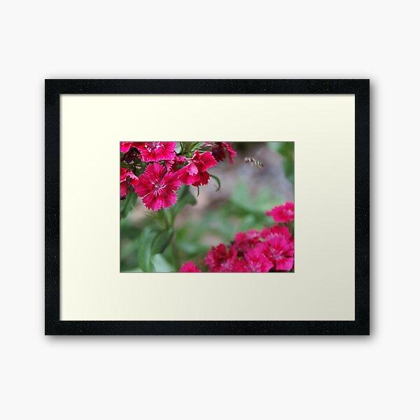 Blossom_1311 Framed Art Print