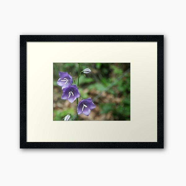 Blossom_1312 Framed Art Print