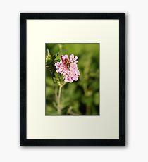 Blossom_1313 Framed Print